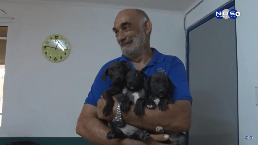 Gratis castratie of sterilisatie voor honden en katten op Bonaire