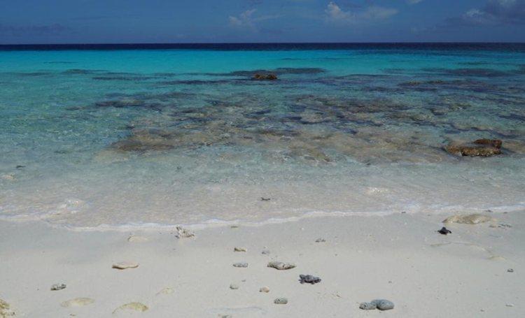 Eerste zeeschildpadden van het seizoen uitgekomen op Klein Bonaire
