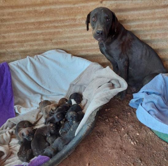 Noodkreet van de dierenopvangcentra op Bonaire