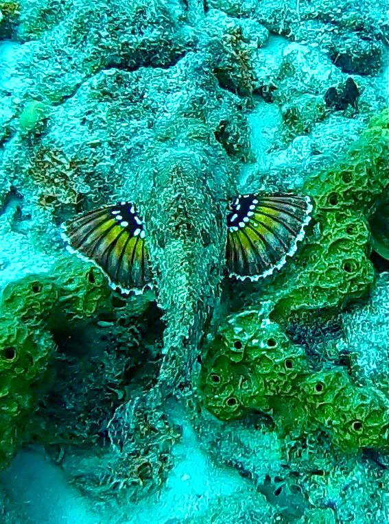 Duiken en snorkelen op Bonaire: Something Special