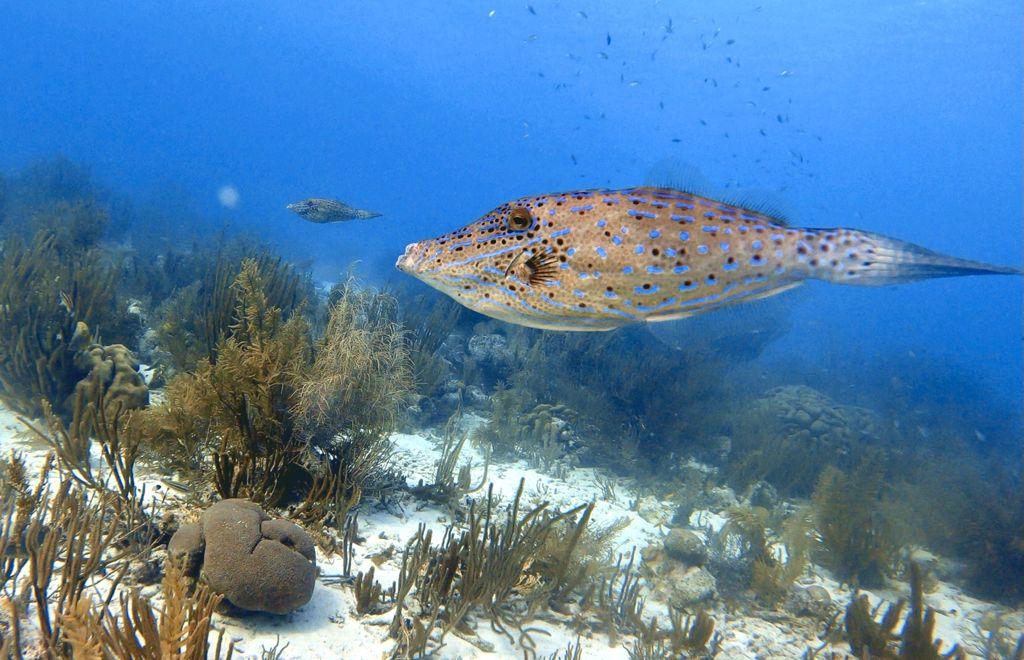 Duiken en snorkelen op Bonaire: Margate Bay