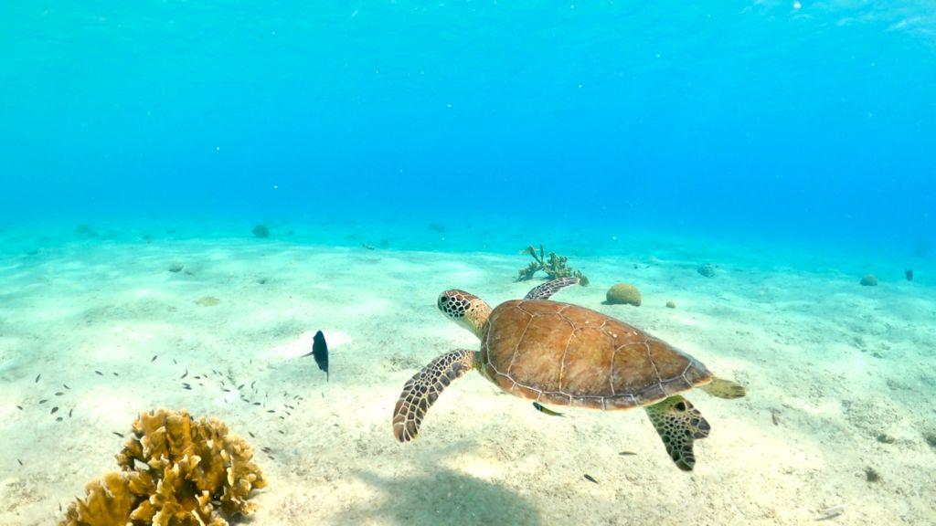 Duiken en snorkelen op Bonaire: Salt Pier of Zoutpier