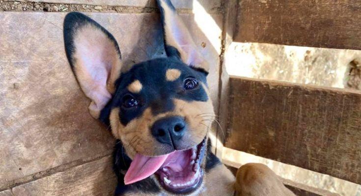 FKK Animal Rescue overvallen door nieuwe regelgeving adoptiehonden
